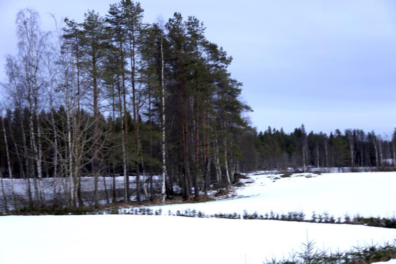 Hoikkalampi sijaitsee Perho-Kivijärvi -tien varrella, mutta lampi ei Reijo Kivelän mukaan ole Perhonjoen alkujuuri.