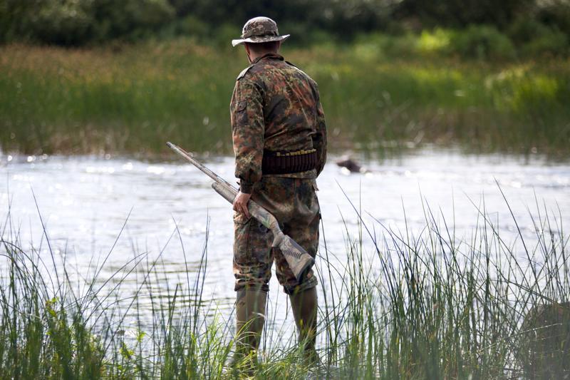 Sini- eli heinäsorsan metsästys alkoi viime vuonna 20. elokuuta, tiistaina. Kuva on vuodelta 2017.