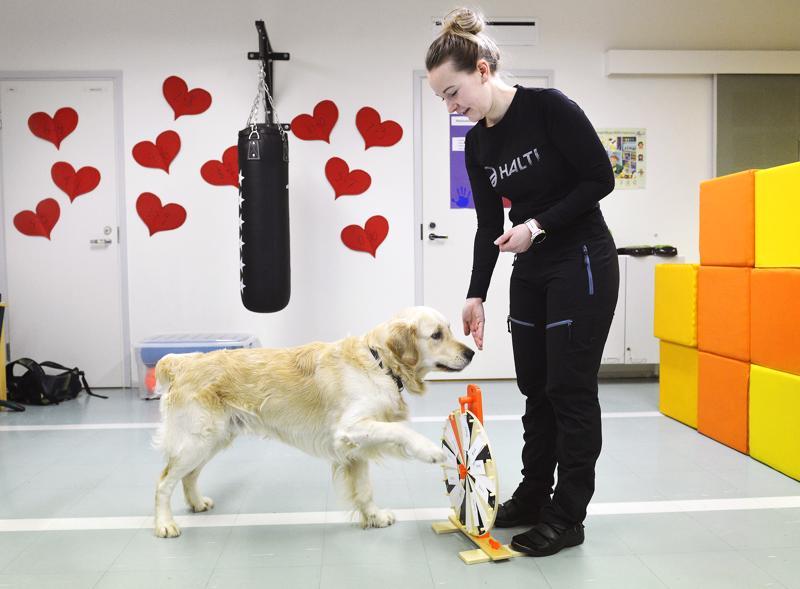 Koulunkäynninohjaaja Emilia Huukin Turo-koira osallistuu opetukseen muun muassa siten, että se pyörittää onnenpyörää, josta valikoituu oppilaalle erilaisia tehtäviä.