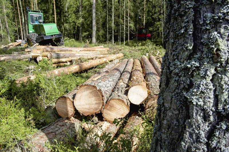 Kirjoittajan mielestä niin sanottu jatkuva kasvatus, jossa korjataan tukkipuut ja jätetään pienempi puusto, on ekologinen vaihtoehto metsänhoitoon.
