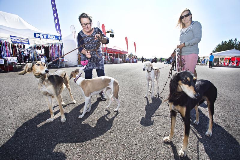 Viime vuonna Kaladogissa oli mukana 3500 koiraa. Inga-Lil Sjöman-Rönn ja Jaana Liukkonen tulivat Kaladogiin Vaasasta vinttikoirapoppoon kanssa.