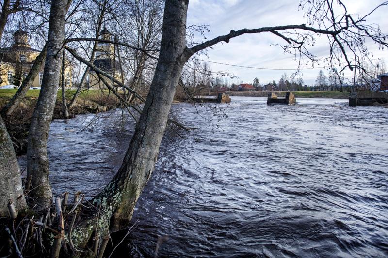 Kruunupyynjoki virtaa valtoimenaan ja vedenkorkeuden ennustetaan nousevan tällä viikolla noin metrin tavanomaista korkeammalle.