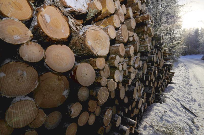 Talven jälkeen teiden varsilla kuljetusta odottavaa puuvarastosumaa ei tänä talvena muodostu,