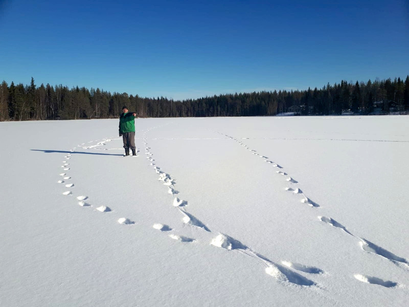 Neljän suden tuoreet jäljet näkyivät selvänä lauantaina Nuolisenjärvellä. Jylhässä asuva Ari Timonen jälkiä ihmettelemässä.