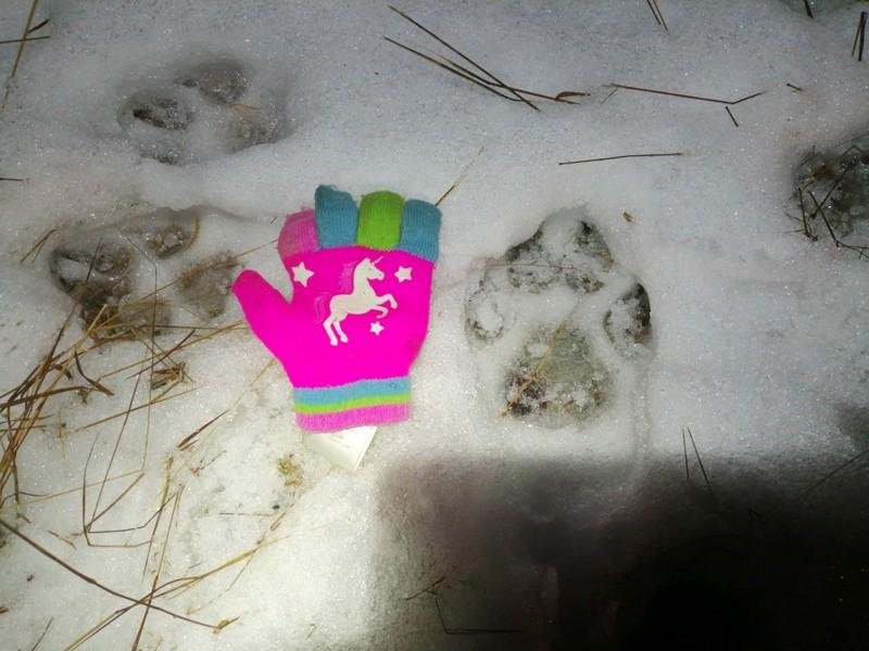 Suden tassunjälki Ylivieskan Vasamasta viime joulukuulta, kokoa on 9 X 11 senttiä. Rinnalla on 6-vuotiaan tyttären lapanen.