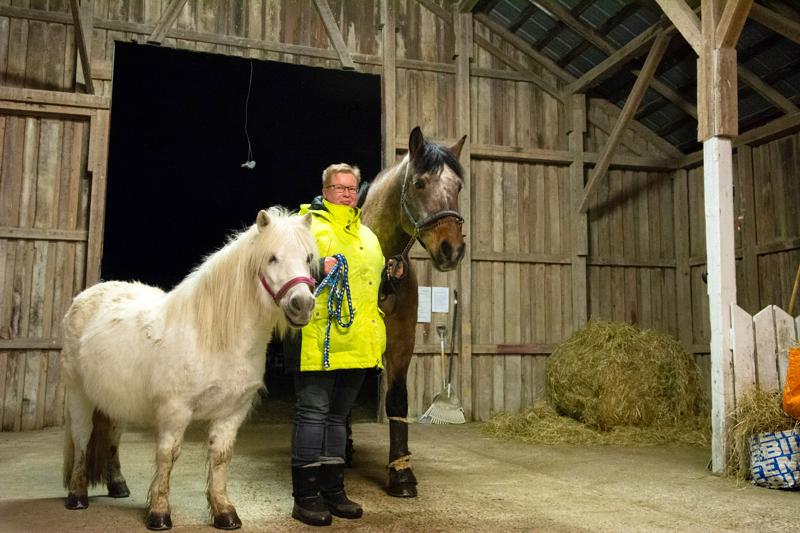 Miia Hyytinen-Oinas päätyi hevosharrastuksen pariin aikuisiällä vuosien tauon jälkeen.