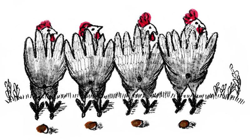 Eläessään kana tuottaa munia ja kuolleena sen voi syödä. Siksi siitä on tullut niin yleinen.