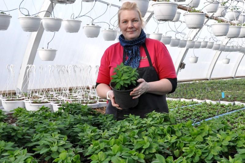 Inkaliljat ovat jo hyvässä kasvuvauhdissa. – Paras hetki työssäni on, kun näkee kasvun lähtevän hyvin käyntiin, Tiia Ritamäki-Seppä toteaa.