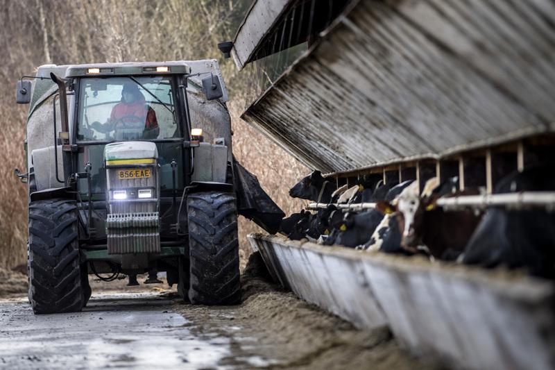 Broändan suku on viljellyt maata ja kasvattanut karjaa Kruunupyyssä 1700-luvun puolivälistä saakka. Tänä päivänä Åsbro Mjölkin maitotilalla on noin 420 lypsävää.