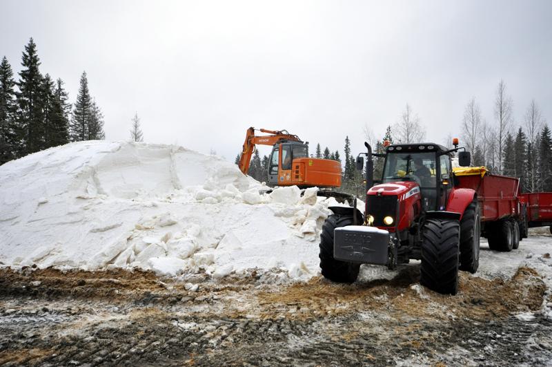 Ylivieskan Kuulan talkooporukka on jo vuosien ajan varmistanut Huhmarin hiihto-olosuhteet säilömällä tykkilunta kesäksi purun alle.