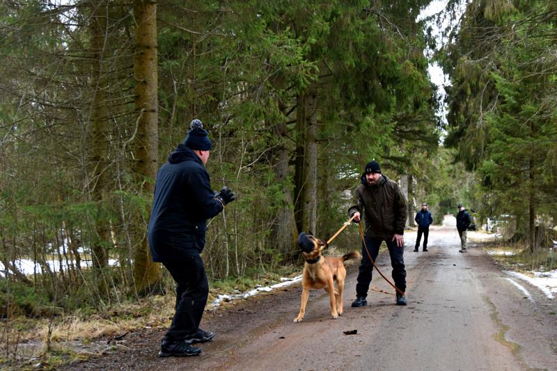 Oulun poliisilaitoksen ylikonstaapeli Sauli Ylikulju käy koiransa Jussin eli Suhteellisen Pupujussin kanssa säännöllisesti Haapavedellä koirankouluttaja Jussi Leinosen järjestämissä treeneissä. Työssään pärjätäkseen koirat tarvitsevat tuhansia tunteja harjoittelua mahdollisimman erilaisissa ympäristöissä.