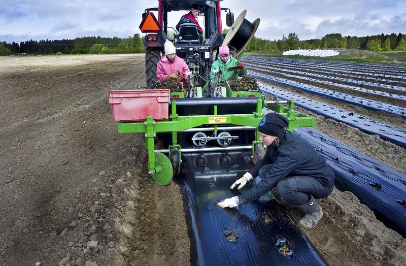 Hauhtosen tilalla on pitkät perinteet ukrainalaisen kausityövoiman palkkaamisessa. Kalevi Hauhtonen, Lena Isaeba, Ludmila Vanina ja Elina Jukkola istuttamassa mansikkaa kesällä 2012.