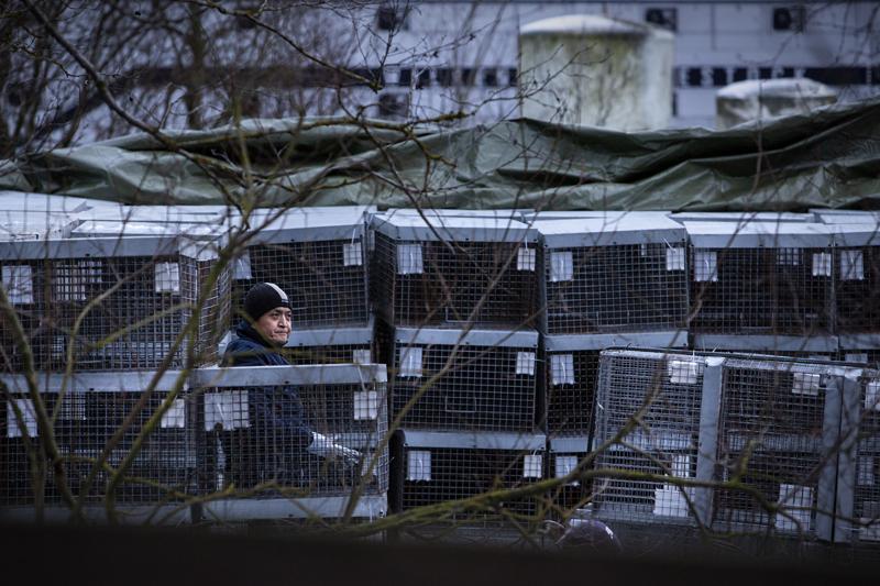 Kiinalaisomisteisen JP Turkis Oy:n kettutarhasta Kokkolan Vitsarissa on tehty jälleen ilmoitus ympäristövalvonnalle ja päivystävä eläinlääkäri on käynyt tarkistamassa tilanteen.