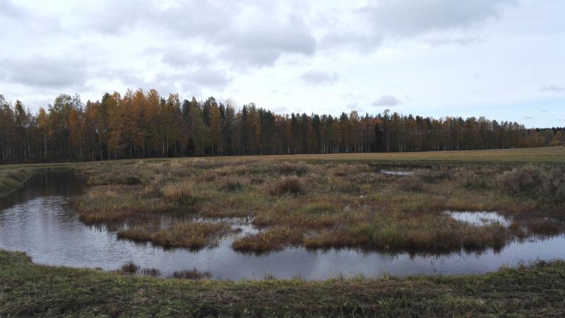 Reisjärven Kangaskylällä sijaitseva kosteikko