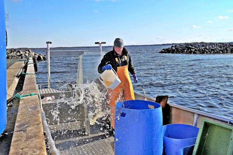 Veneen putsaaminen kalastusreissun jäljiltä käy Roland Semskarilta käden käänteessä.