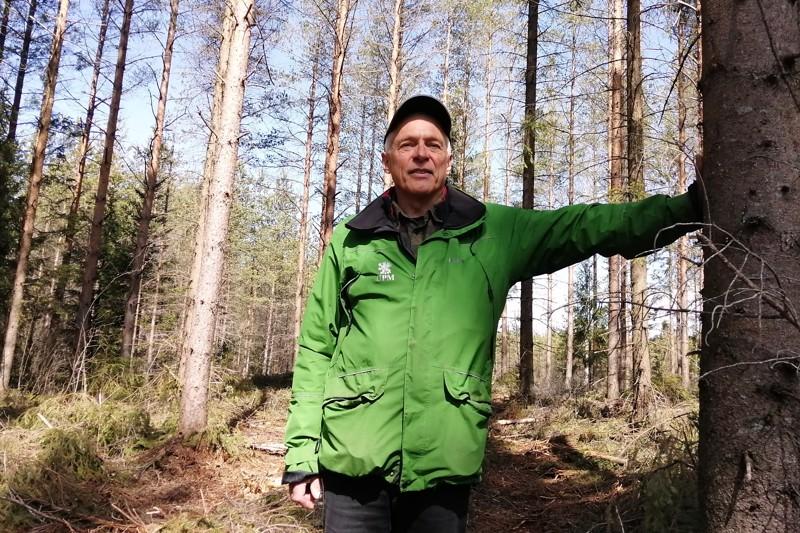 Metsä on Henrik Enalle läpikotaisin tuttu ympäristö. Tässä kohtaa on hiljan harvennettu.