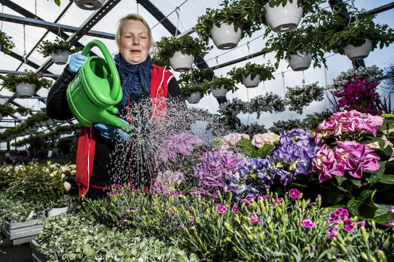 Hortonomi Tiia Ritamäki-Seppä suosittelee käyttämään kesällä kastelulannoitetta erityisesti kukkapenkkiin.