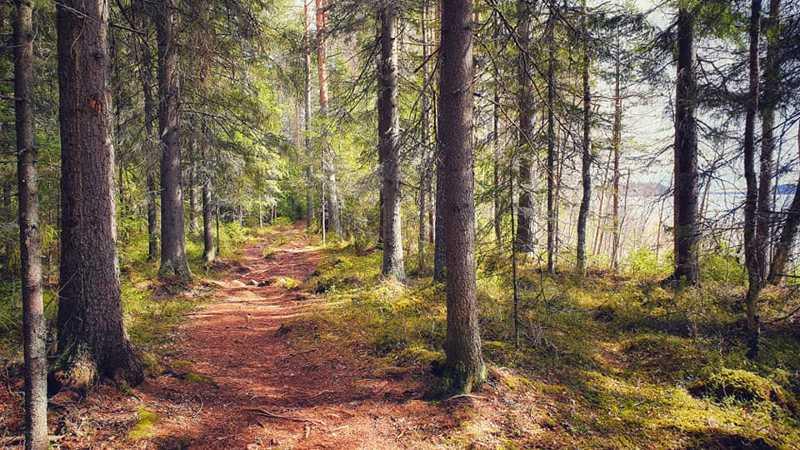 Polut kutsuvat keväiseen metsään.