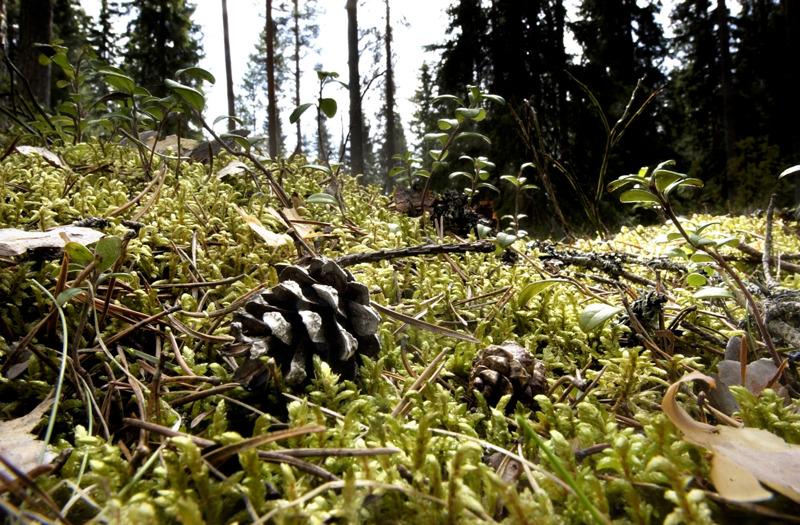 Maastokartoittajat ovat kesällä liikkeellä Keski-Pohjanmaalla ja Kalajokilaakson alueella päivittämässä peruskarttaa.