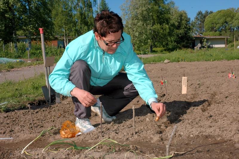 Paakkilan vuokrapalstoilla möyrittiin jo multaa. Leila Sarpola oli pistänyt maahan varhaispotun siemenet sekä salaatit, porkkanat ja sipulit.