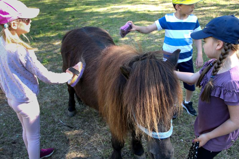 Ponit eivät ole 4H:n omistamia, mutta lapset saavat osallistua niiden hoitoon.