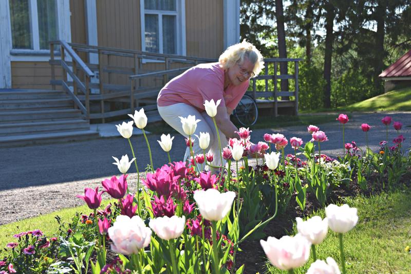 Leena Ruuska seurustelee rakkaiden kukkapenkin lapsostensa kanssa. Kesä on nyt Juhannuksen alla mehukkaimmassa kukassaan Paakkilan pihassa.