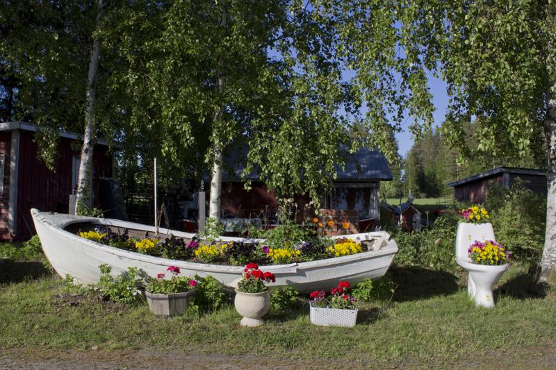 Pirkko kertoo koittaneensa löytää veneeseen joitakin monivuotisia kasveja, kuten unikkoja.