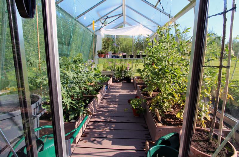 Kasvihuone on Lindellien uusien hankinta. Nyt siellä kasvaa muun muassa tomaatteja.