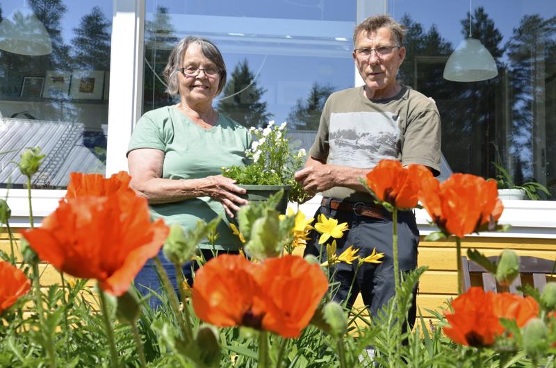 Liisa ja Pekka Alakuijala hoitavat isoa puutarhaa ja kasvimaata yhdessä.