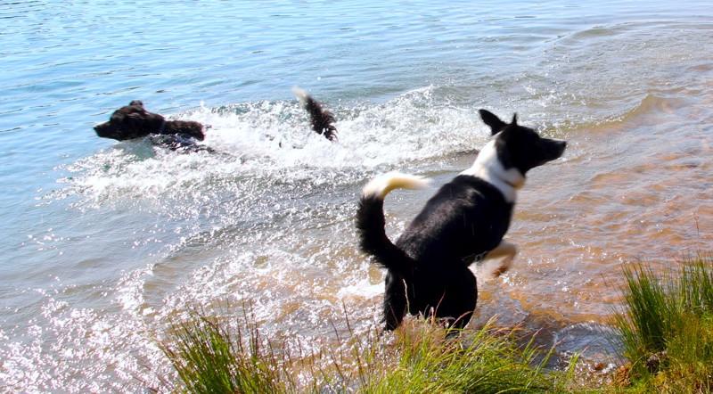 Virallisen, eläimille osoitetun rannan olemassaolo helpottaisi useampia lemmikin omistajia.