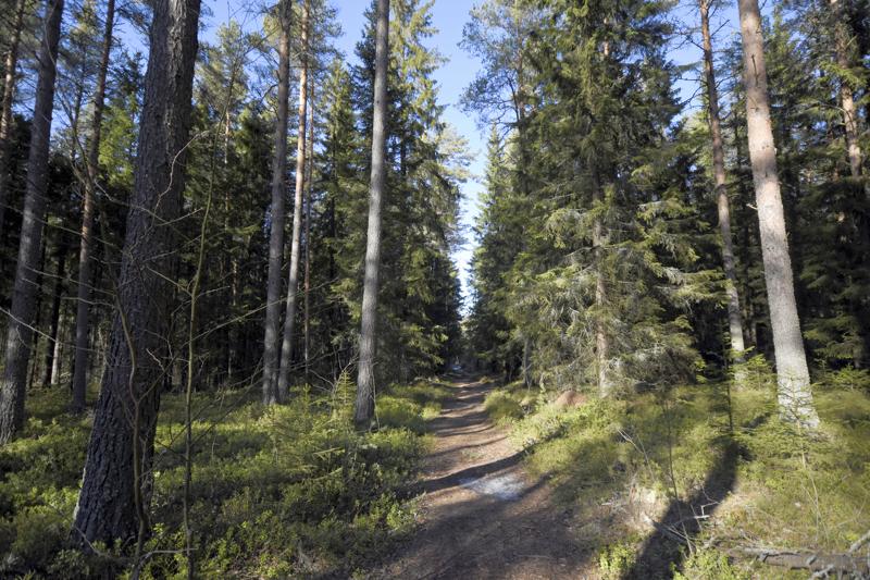 Hankkeella haetaan ja välitetään tietoa, kokemuksia ja koulutusta muun muassa erilaisista etsänkasvatusvaihtoehdoista ja sovitetaan yhteen metsien eri käyttömuotoja.