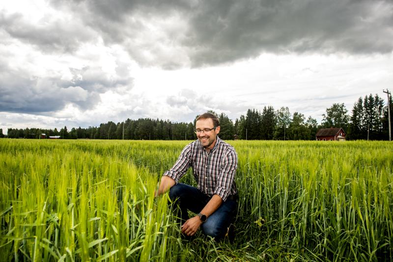 Rami Rauhalan ensimmäinen maissisato epäonnistui osittain. Silti maissi palannee hänen pelloilleen tulevina vuosina.