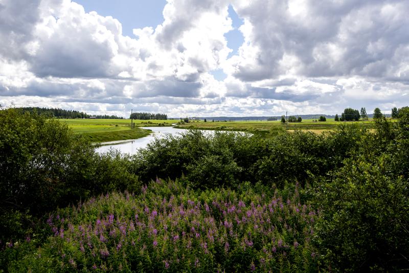 Keskipohjalaismaisema aidoimmillaan - joki, jota reunustavat vehreät pellot. Kuva on otettu Toholammilla.