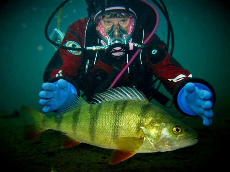 Laitesukeltaja Hanna Sjöblom on sukeltanut Suomessa, Välimerellä ja Aasiassa. Hän rakastaa itsekin valokuvaamista veden alla, mutta ylläolevassa kuvassa hänet on ikuistettu yhteiseen otokseen ahvenen kanssa.