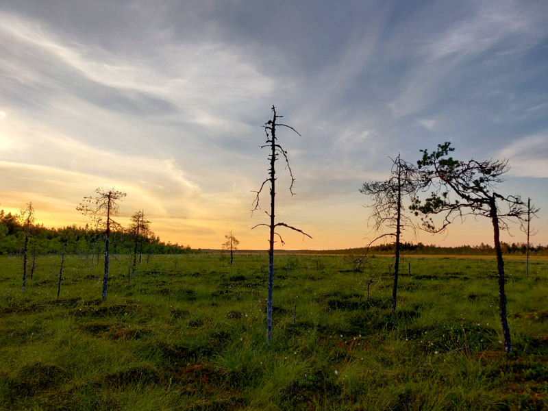 Luontoarvot veivät voiton Julkunevalla eikä alueella ole näköpiirissä turpeennostoa.