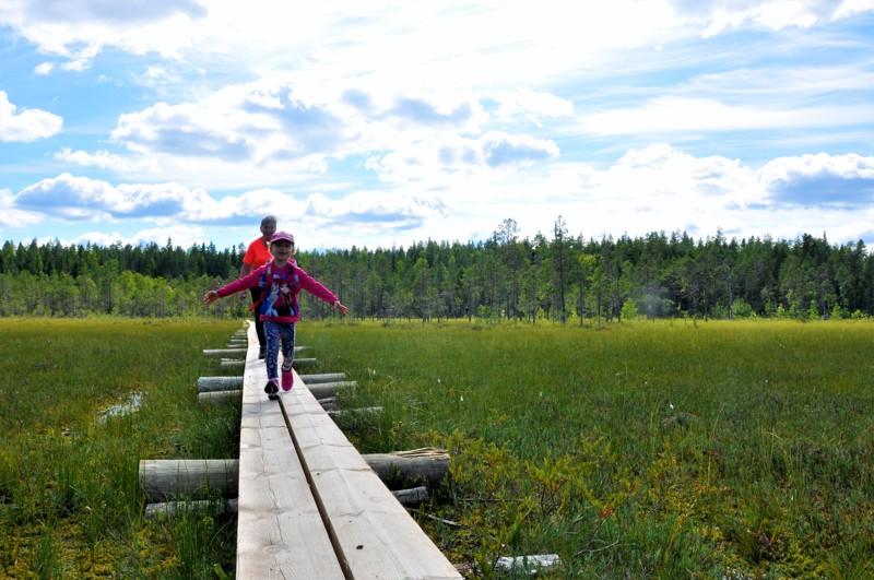 Vasan kierrokselle Salamajärven kansallispuistossa on laitettu pitkästi tuliterää pitkosta.