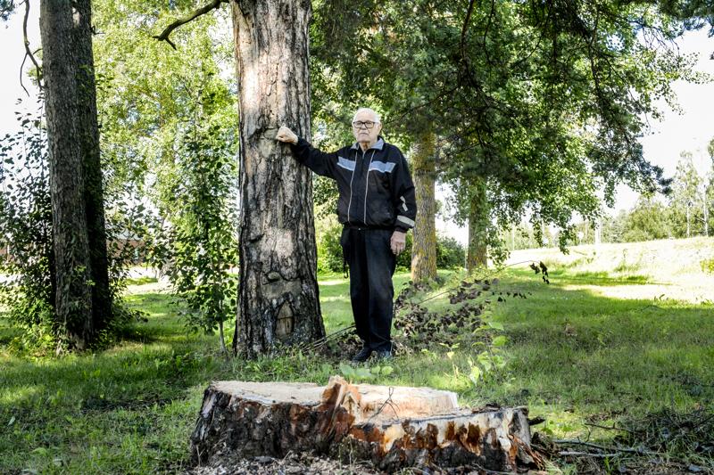 Haapajärven kotiseutuneuvos Juha Eronen toivoo, että kaadetun piiskamännyn runko pystytettäisiin kannon päälle uudelleen. Toisessa, pystyyn jätetyssä piiskamännyssä näkyy edelleen jäljet parruista, joihin raipparangaistuksen saaneet laitettiin kiinni.