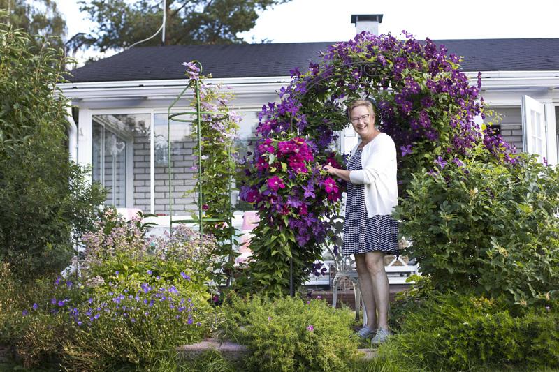 Aila Pöyhtäri on innostunut kärhöistä vasta viime vuosina. Tänä kesänä kärhöt yllättivät kukkapaljoudellaan.