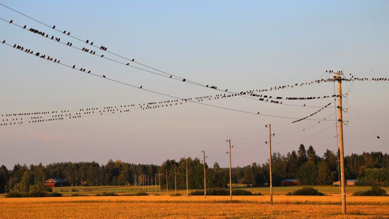 Syksy on lintuharrastajalle kiireistä aikaa.