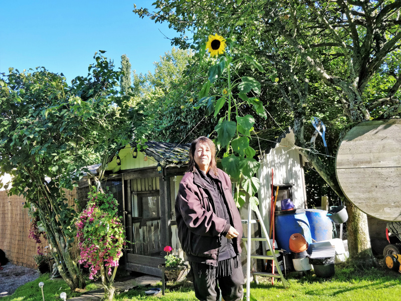 – Otan auringonkukan siemenet talteen ja ensi keväänä istutan ne maahan. Ehkä saan omasta omaa, Pia Pärssinen toivoo.