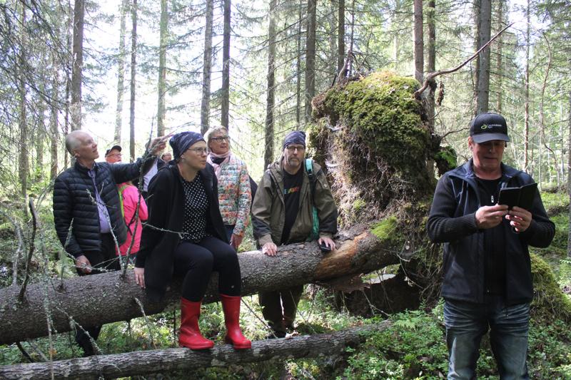 Hieno metsä, sanovat luontotoimittajat METSO-ohjelman kohteessa. Vasemmalta Timo Kujala, Katja Lamminen, Ismo Tuormaa ja Osmo Palosaari Metsäsuunnittelu Hollanista.