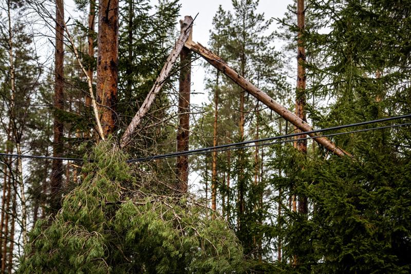 Teille, raiteille ja sähkölinjoille kaatuvat puut saattavat aiheuttaa monenlaisia ongelmia keskiviikon ja torstain aikana.