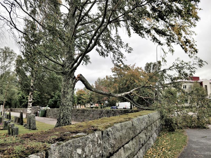 Vanhan koivu oksa katkesi kiviaidalle Uudella hautausmaalla.