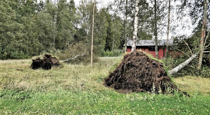 Vega-hallin naapurissa kaatui kaksi puuta.