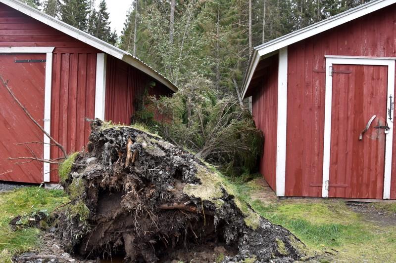 Himangan Vatungissa puu oli kaatunut venevajojen väliin.