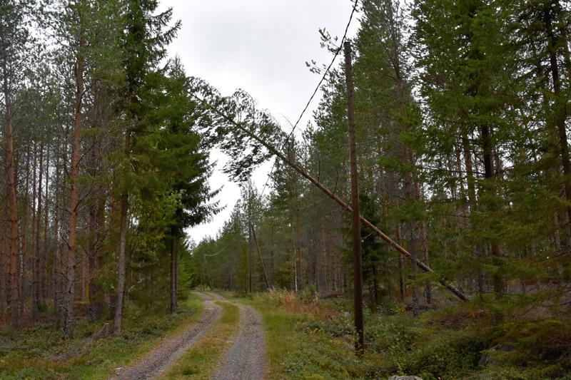Tyypillinen tilanne. Puu on kaatunut sähkölinjan päälle.