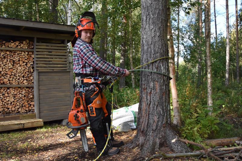 Valmiina. Ville Järvenpää valmiina nousemaan puuhun.