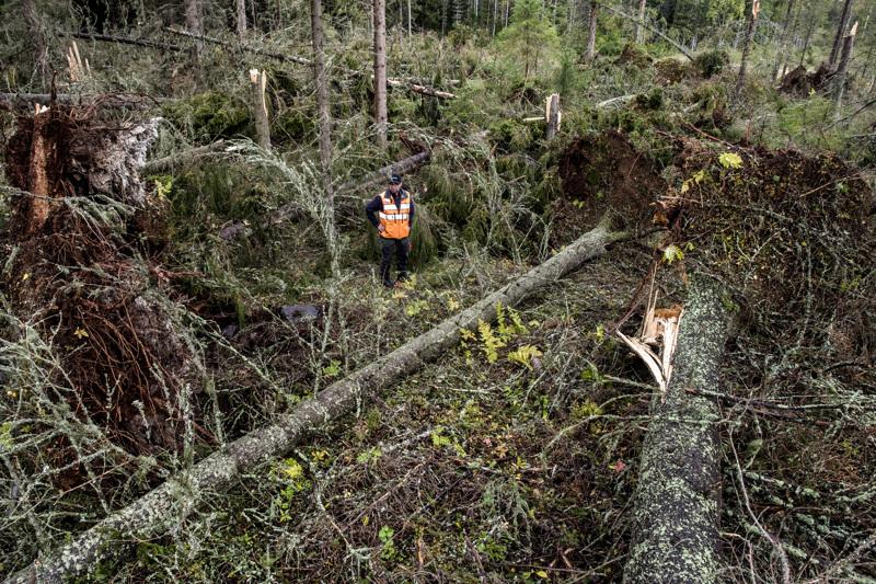 Myrskytuhot korjataan nopeasti, mutta ensisijaisesti työturvallisuus huomioon ottaen, sanoo metsätalousinsinööri Ahti Räinä.