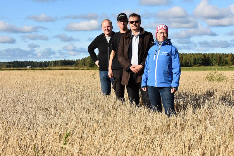 Yhteistyötä alueen eduksi. Jari Orjala, Miika Hollanti, Ari Mickos ja Ritva Jaakkola toteavat ohralohkon puintikypsäksi.