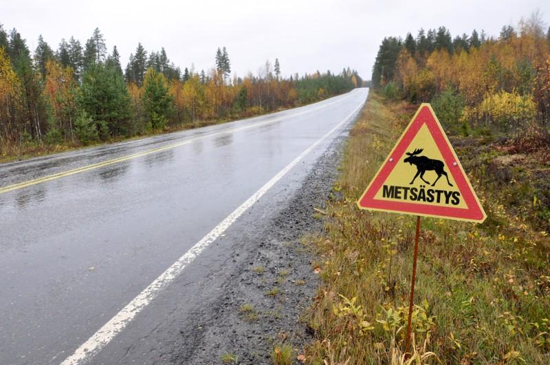 Käynnissä olevasta hirvijahdista voidaan varoittaa muun muassa varoituskolmiolla.